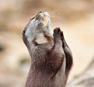 praying-gopher1